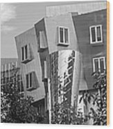 Massachusetts Institute Of Technology Stata Center Wood Print