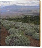 Maui Lavender Farm Wood Print