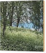 Meadow And Trees In Spring. Vitabergsparken, Stockholm, Sweden. Wood Print