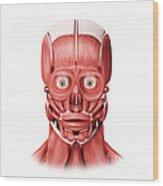 Medical Illustration Of Male Facial Wood Print