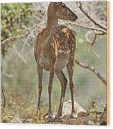 Mesopotamian Fallow Deer 5 Wood Print