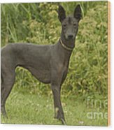 Mexican Hairless Dog Wood Print