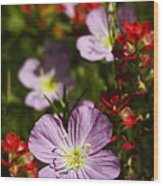 Mexican Primrose  Wood Print