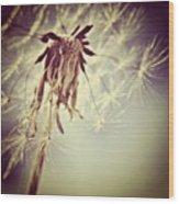 #mgmarts #dandelion #makeawish #wish Wood Print