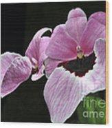 Miltoniopsis Alger Wood Print