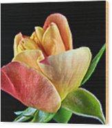Minature Rose  Wood Print