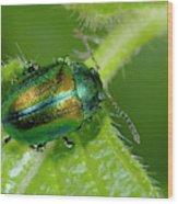 Mint Beetle Wood Print