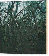 Misty Trees Wood Print