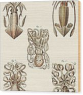 Molluscs Or Soft Worms Wood Print