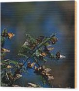Monarch Butterflies Wood Print
