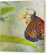 Queen Butterfly Danaus Gilippus Wood Print