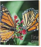 Monarch Danaus Plexippus Wood Print
