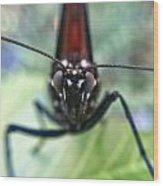 Monarch Stare Wood Print