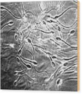 Monkey Sperm Wood Print