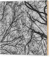 Monochrome Forest Wood Print