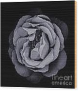 Monochrome Rose Wood Print