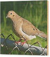Morning Dove I Wood Print