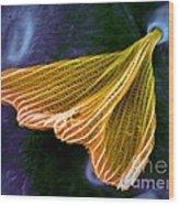 Moth Scale, Sem Wood Print