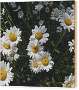 Mountain Daisies Wood Print