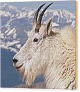Mountain Goat Portrait On Mount Evans Wood Print