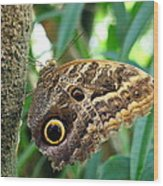 Mournful Owl Butterfly Wood Print