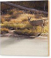 Mule Deer   #3942 Wood Print