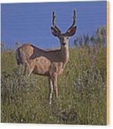 Mule Deer Buck In Velvet   #2231 Wood Print