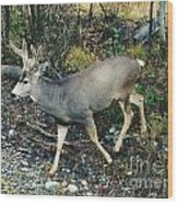 Mule Deer Wood Print
