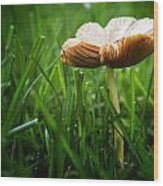 Mushroom Growing Wild On Lawn Wood Print