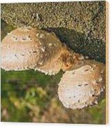 Mushroom On Tree Trunk Wood Print
