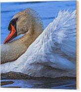 Mute Swan 2 Wood Print