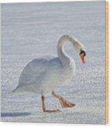Mute Swan On St Clair River Wood Print