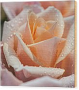 My Birthday Rose 1 Wood Print