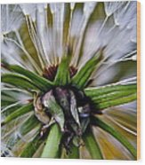 Mystical Magical Dandelion Wood Print
