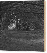 Mystical Yew Trees 1 Wood Print
