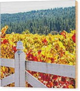 Napa Fall Grapes Wood Print