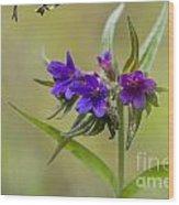 Purple Gromwell Wood Print