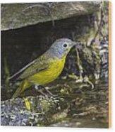 Nashville Warbler Wood Print