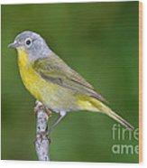 Nashville Warbler Vermivora Ruficapilla Wood Print
