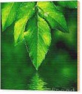 Natural Leaves Background Wood Print