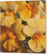 Nemesia Named Angelart Pear Wood Print