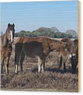 New Forest Ponies Wood Print
