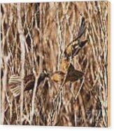 New Zealand Fantail Chicks Being Fed By Parents Wood Print