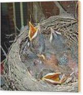 Newborn Robins Wood Print