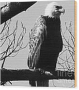 North American Bald Eagle Wood Print