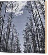 North Woods Forest Wood Print
