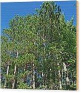 North Woods Tree Line Wood Print