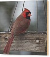 Northern Cardinal Wood Print by John Kunze