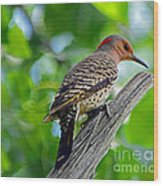Northern Flicker Wood Print
