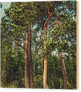 Northern Forest  Wood Print